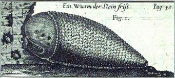 stone worm shamir